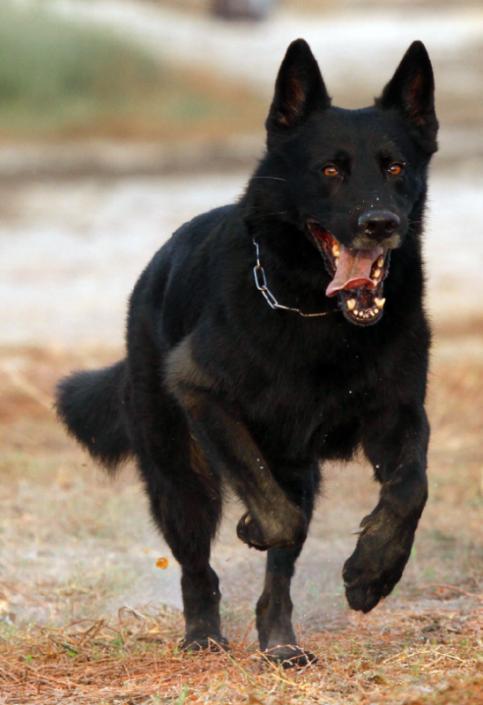 himmel-dafins-hunde-20