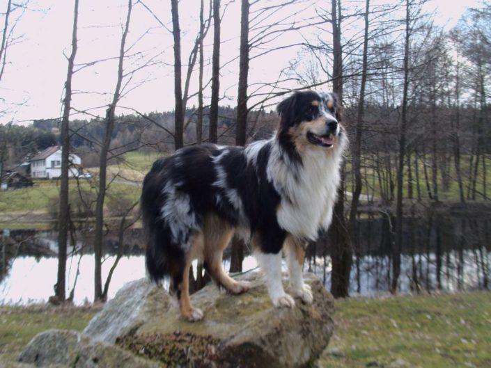 himmel-dafins-hunde-52